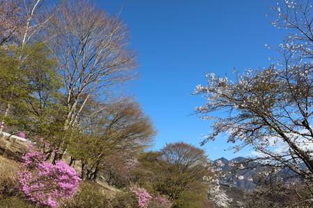 三峯神社神社15