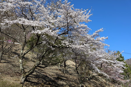 三峯神社神社16