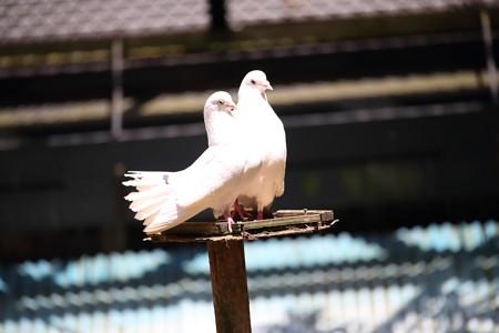 浜松市動物園4