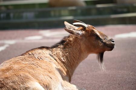 浜松市動物園16