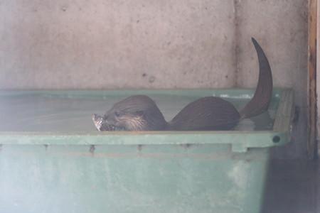浜松市動物園52