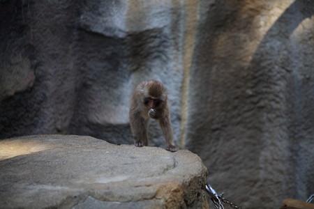 浜松市動物園68
