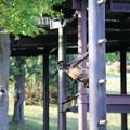 浜松市動物園75