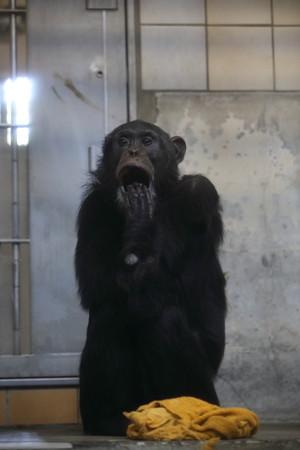 浜松市動物園89