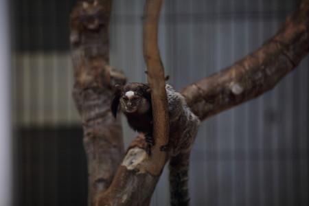 浜松市動物園92