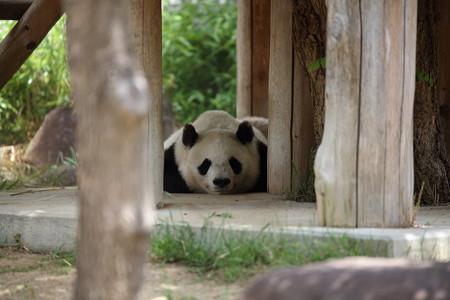 神戸市王子動物園1