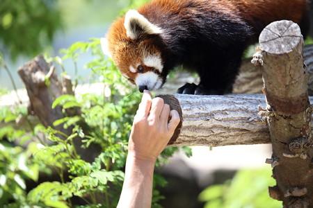 神戸市王子動物園27