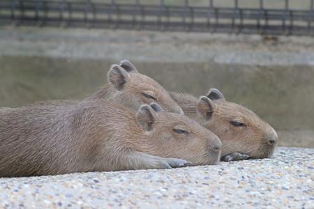 神戸市王子動物園123