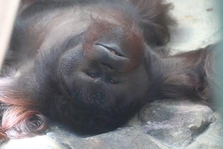 神戸市王子動物園117