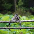上野動物園63