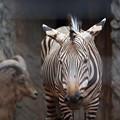 上野動物園78