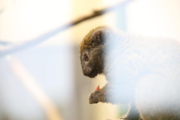 写真: 上野動物園90