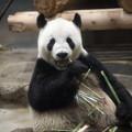 写真: 上野動物園93