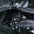 写真: 小雨降る