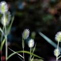 写真: 草取り