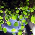 写真: Green