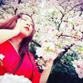 写真: 桜と色香