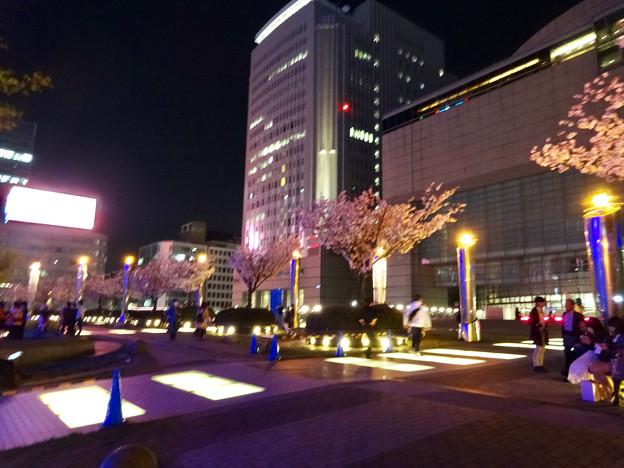 満開だったオアシス21の桜(2017年4月16日) - 1