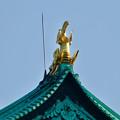 写真: 名城公園から見上げた名古屋城天守閣 - 10:金シャチ
