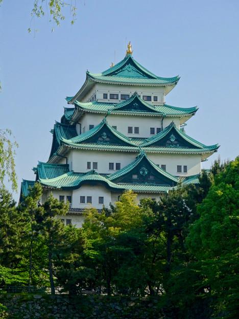 名城公園から見上げた名古屋城天守閣 - 12