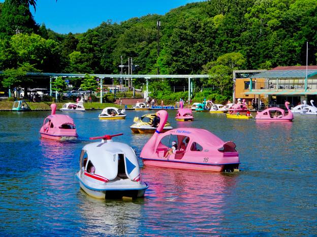 東山動植物園:沢山のスワンボート - 2