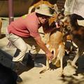 Photos: 東山動植物園:アカカンガルーの袋の中 - 1