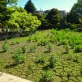 Photos: 東山動植物園:水が干上がっていた正門前の池