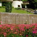 Photos: 東山動植物園:満開だったバラ園のツツジ