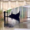 写真: 堀川:錦橋下に停留されてたゴンドラ - 2