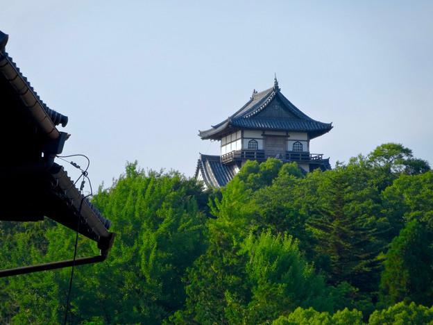 犬山城下町から見上げた、落雷でシャチホコが壊れた犬山城(2017年7月15日) - 6