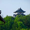 写真: 犬山城下町から見上げた、落雷でシャチホコが壊れた犬山城(2017年7月15日) - 6