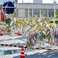 安城七夕まつり 2017 No - 7:安城駅前の笹飾り