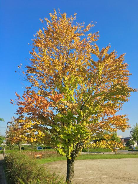 9月なのに、もうすっかり紅葉してた、小牧スポーツ公園(パークアリーナ小牧)の木
