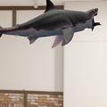 写真: 空中を泳ぐリアルなサメをAR表示できる「shARk」:アプリ内課金でホオジロザメを表示 - 22