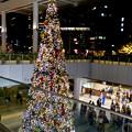 ゲートタワー前のクリスマスツリー(2017年11月12日) - 5
