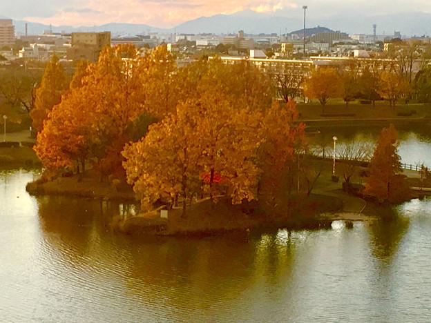 落合公園 水の塔から見下ろした、夕暮れ時の紅葉した木々 - 2