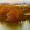 写真: 落合公園 水の塔から見下ろした、夕暮れ時の紅葉した木々 - 2