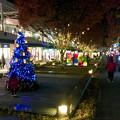 Photos: 星が丘テラスのクリスマスイルミネーション 2017 No - 14
