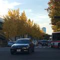 若宮大通公園の紅葉した並木 - 1