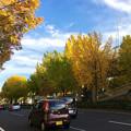 若宮大通公園の紅葉した並木 - 5