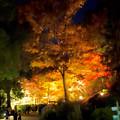 東山動植物園の紅葉ライトアップ 2017 No - 35