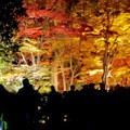 東山動植物園の紅葉ライトアップ 2017 No - 36