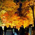 東山動植物園の紅葉ライトアップ 2017 No - 37