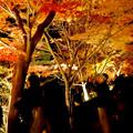 東山動植物園の紅葉ライトアップ 2017 No - 38