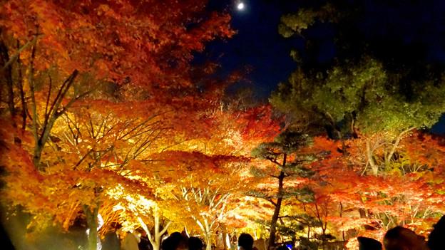 東山動植物園の紅葉ライトアップ 2017 No - 41:月と紅葉