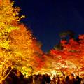 東山動植物園の紅葉ライトアップ 2017 No - 45:月と紅葉