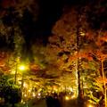 東山動植物園の紅葉ライトアップ 2017 No - 46