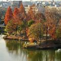 落合公園 水の塔から見下ろした紅葉した木々(2017年12月7日) - 2