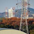 落合公園 水の塔から見た、紅葉した木々越しのスカイステージ33