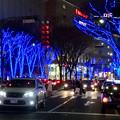 今年(2017年)も始まった、大津通の街路樹のクリスマス・イルミネーション - 4
